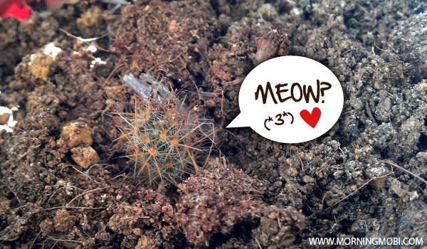 Cactus or catcus - MorningMobi Web Comics