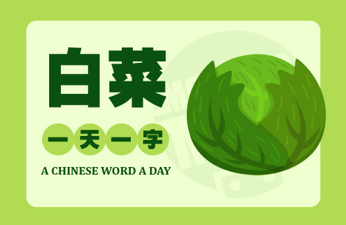 A Chinese Word A Day 白菜 Cabbage
